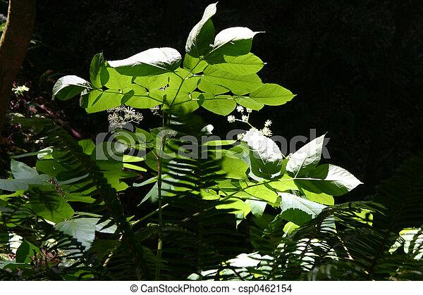 Sunlit in Muir Woods - csp0462154