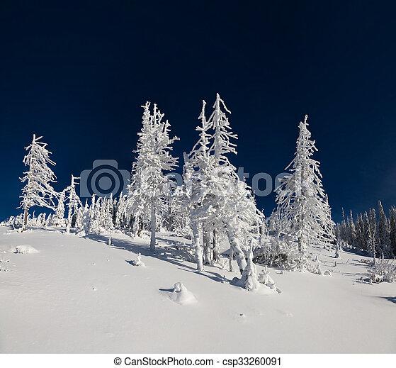 Sunne vinter scene in the mountain forest. - csp33260091