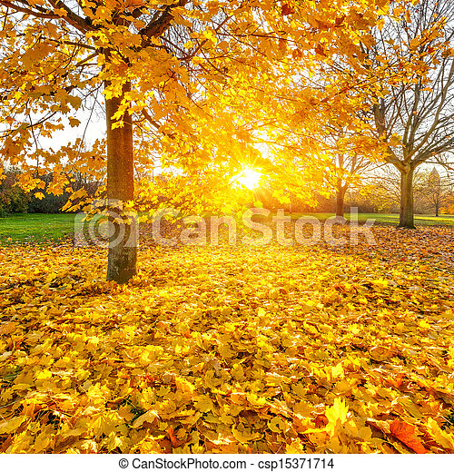 Sunny autumn foliage - csp15371714