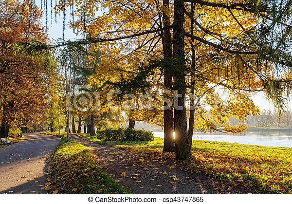 sunny autumn in park - csp43747865