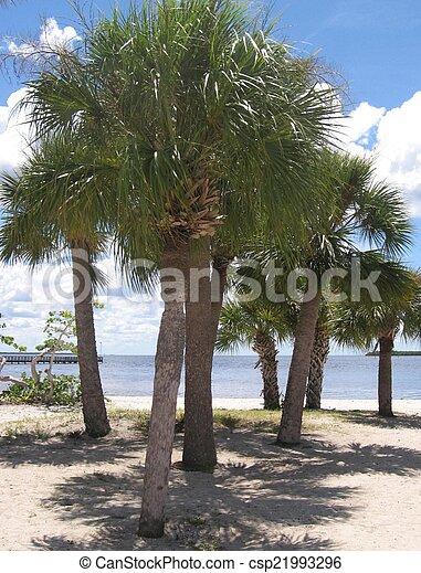 Sunny Beach - csp21993296