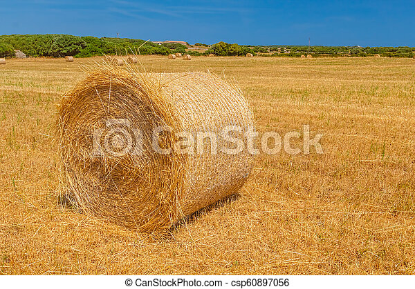Sunny field with big hay bale - csp60897056