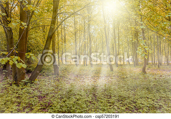 Sunny forest with sun rays - csp57203191
