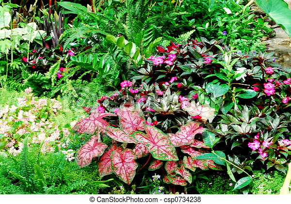 Sunny garden. Bright tropical flowers and foliage in natural setting .