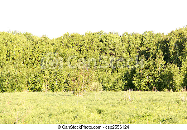 Sunny glade in a forest - csp2556124