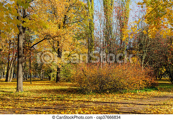 sunny landscape in the park - csp37666834