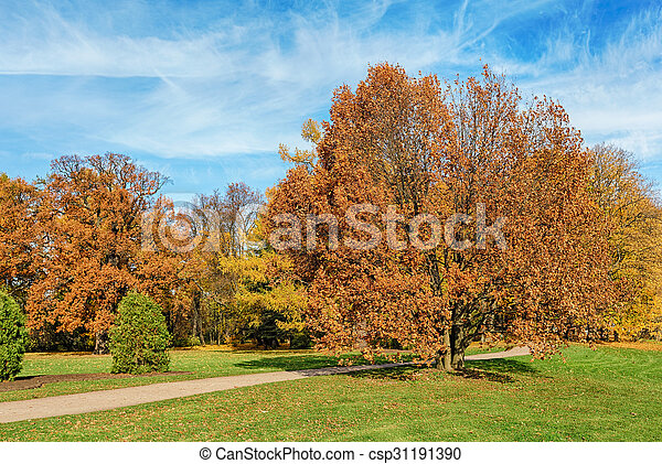 sunny landscape with autumn trees - csp31191390