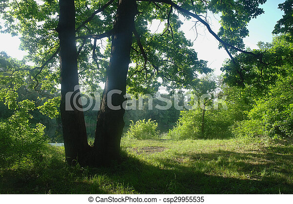 Sunny morning in a forest glade - csp29955535