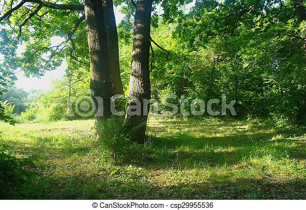 Sunny morning in a forest glade - csp29955536