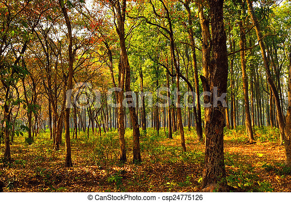 Sunny morning in dense forest - csp24775126