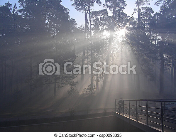 sunny morning in forest - csp0298335