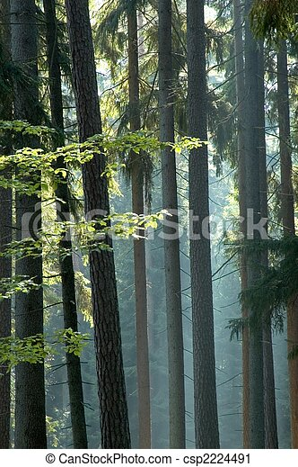 Sunny morning in the forest - csp2224491