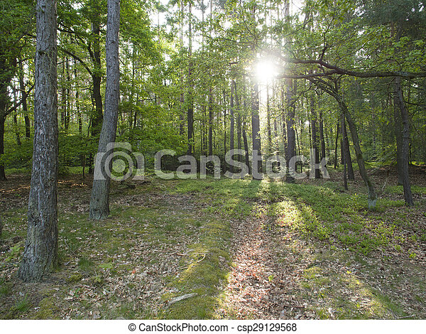 Sunny morning in the forest - csp29129568