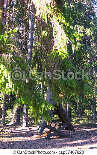 Sunny Spring Day in the Forest - csp57467628