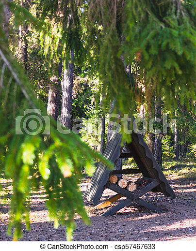 Sunny Spring Day in the Forest - csp57467633