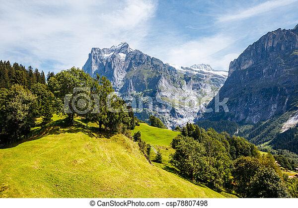 Sunny view of alpine Eiger village. Location place Swiss alps, Grindelwald valley. - csp78807498