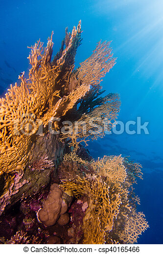 Sunrays in the coral garden - csp40165466