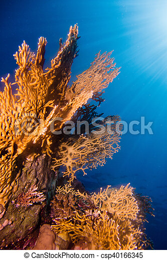 Sunrays in the coral garden - csp40166345