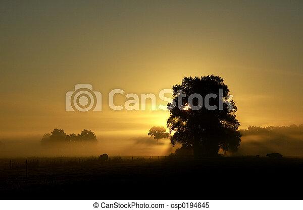 sunrise 1 - csp0194645