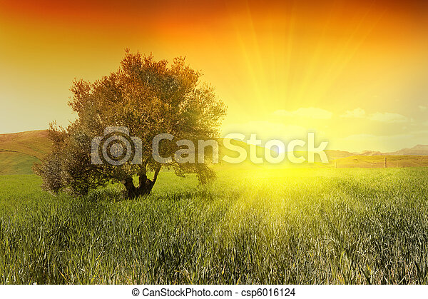 Sunrise and olive tree - csp6016124