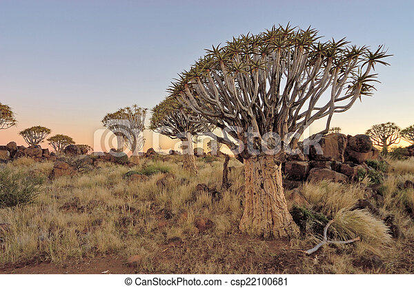 Sunrise at the Quiver Tree Forest, Namibia - csp22100681