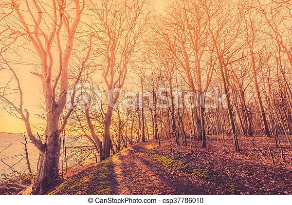 Sunrise in a forest with spooky trees - csp37786010