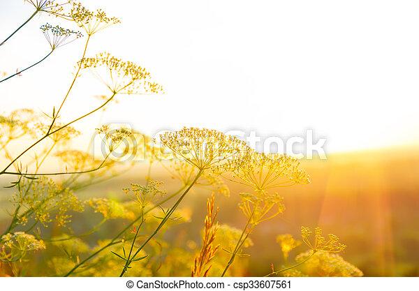 Sunrise in the summer - csp33607561