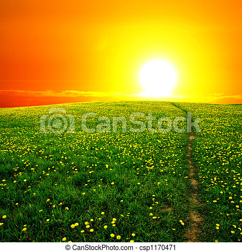sunrise on dandelion field - csp1170471