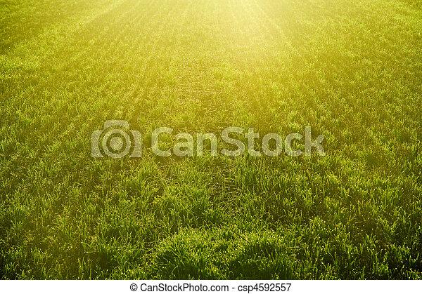 Sunrise over crop field detail - csp4592557