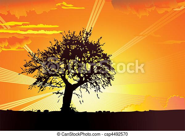 Sunrise. - csp4492570