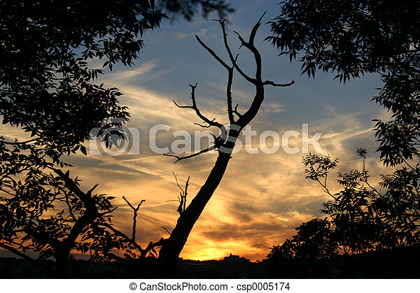 Sunset 3 - csp0005174
