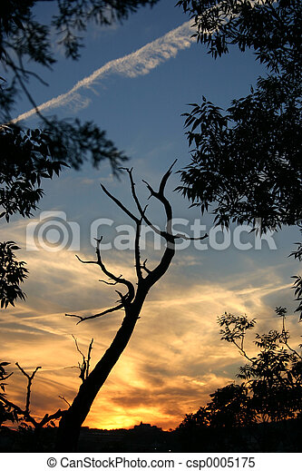 Sunset 4 - csp0005175