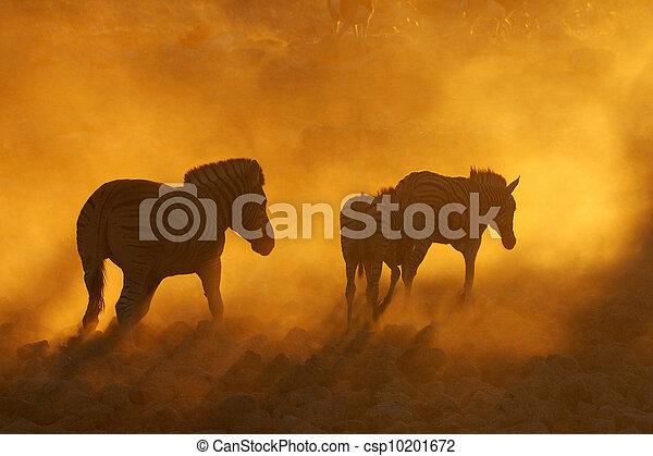 Sunset at Okaukeujo, Namibia - csp10201672