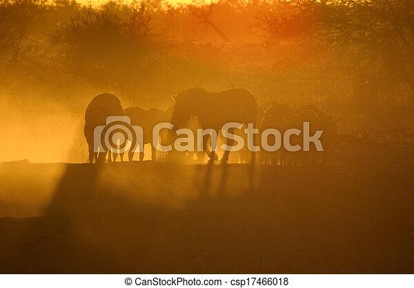 Sunset at Okaukeujo, Namibia  - csp17466018