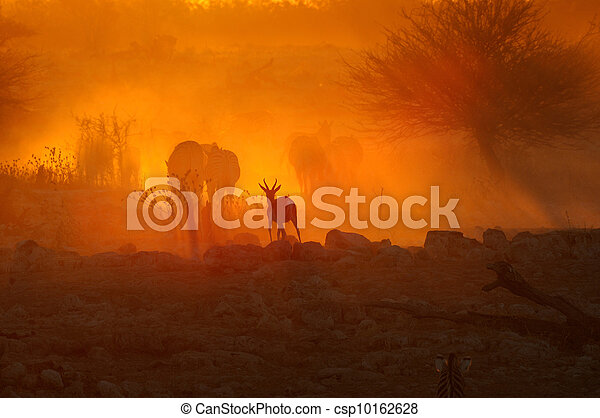 Sunset at Okaukeujo, Namibia - csp10162628