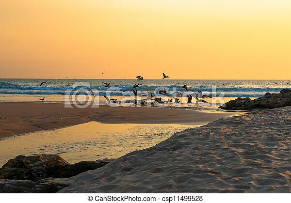 Sunset at the Beach - csp11499528