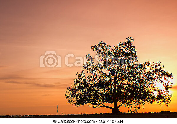 sunset behind the trees - csp14187534