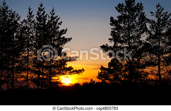 sunset behind the trees - csp4803783
