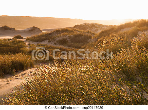 Sunset in a dune of the beach - csp22147939