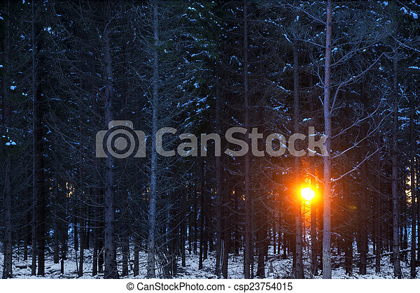 Sunset in forest - csp23754015