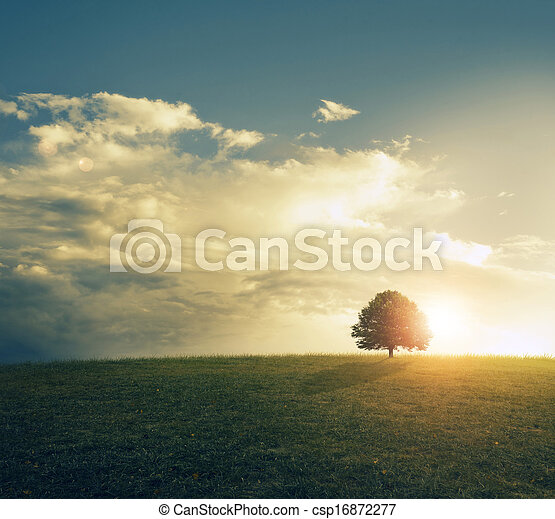 Sunset in grassy field beautiful sunset behind single tree sunset in grassy field csp16872277 voltagebd Images