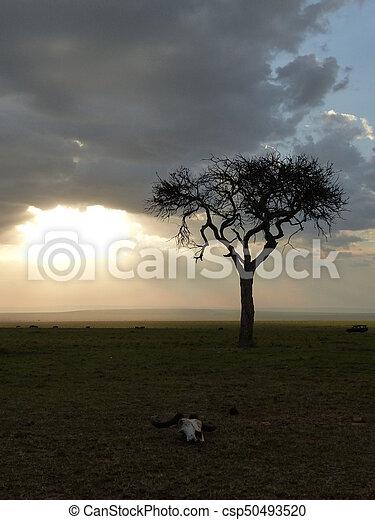 Sunset in the savannah - csp50493520