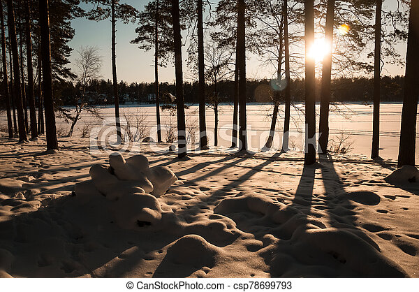 Sunset in the winter forest. Sunbeams and shadows of trees. - csp78699793