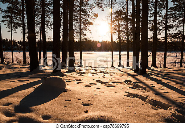 Sunset in the winter forest. Sunbeams and shadows of trees. - csp78699795