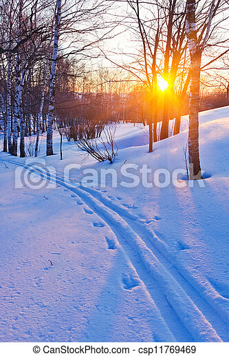 Sunset in winter forest - csp11769469