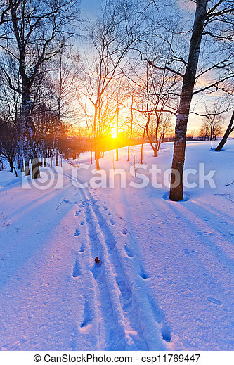 Sunset in winter forest - csp11769447