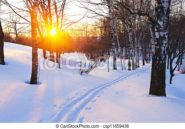 Sunset in winter forest - csp11659436
