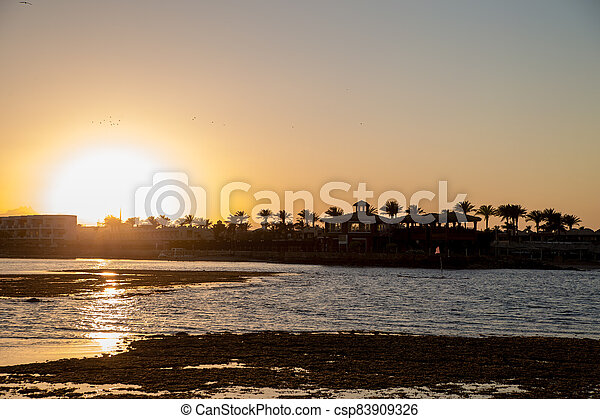 sunset on the sea with palm trees in the evening - csp83909326