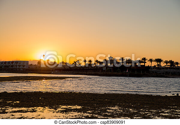 sunset on the sea with palm trees in the evening - csp83909091