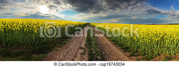 Sunset over canola field with path in Slovakia - panorama - csp19743034